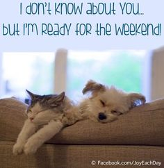Ready for weekend quote via www.Facebook.com/JoyEachDay
