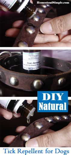 DIY Naturals – Tick repellent for Dogs - rose geranium essential oil about 4 drops on collar for a Jack Russell size dog
