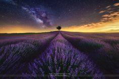 "Foto ""The Lavender Field and Milky Way"" by Jesús M. García © (@jmgcia) #500px"