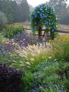 Cottage gardens really are beautiful things aren't they? And if you plant native grasses amongst the flowers, the texture of the garden improves and the amount of water required declines.