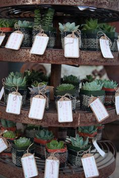 Give your guests a gift that'll last a little longer, like tiny succulents | Fawn Christiansen Photography