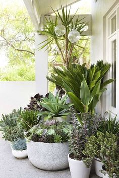 Drought Tolerant Landscape & Path Ideas - Landscape design with potted plants . - Drought Tolerant Landscape & Path Ideas – Landscape design with potted plants – Secret Gardens - Patio Plants, Outdoor Plants, Outdoor Gardens, Deck Plants Ideas, Plants On Balcony, Plants In Pots, Potted Trees Patio, Big Potted Plants, Front Porch Plants