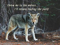 """Decorate your home or office with gorgeous nature photographs that also deliver powerful life messages.This image shows a menacing looking wolf in the woods with glowing yellow eyes. Quote """"Throw me to the wolves,  I'll Return Leading the Pack!"""" inspirational,quotation,sayings,motivational,perseverance,"""