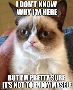 Existentialism a la Grumpy Cat