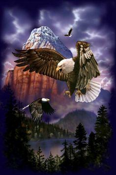 Flying Eagle by David Penfound Eagle Images, Eagle Pictures, Nature Pictures, Royal Wallpaper, Eagle Wallpaper, Native American Pictures, Native American Artwork, Eagle Face, Bald Eagle
