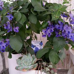 Arrangemang med klarblå blommor. Havskänsla... #lillahultsblommor #hultarrangemang
