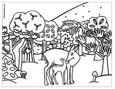 Forest Animal Printable Coloring Pages | ... forest animals coloring page boowa and kwala email forest animals