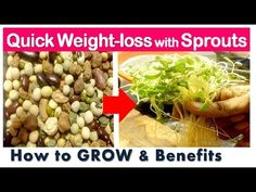 Quick Weightloss with Sprouts | Health Benefits of Sprouts | How to GROW SPROUTS and its Recipe - YouTube