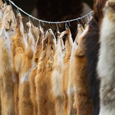 Berkeley, California, Becomes Second U.S. City to Ban Sale of Fur Clothing