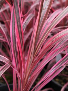 84 best flax images on pinterest in 2018 decks landscaping and the plants are going to be ones known more for their texture or foliage rather than their flowers altavistaventures Images