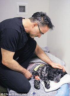 He's the star of popular TV series Supervet, she's well known for her love of all creatures great and small – so was there some animal attraction in the air when Liz Jones met Noel Fitzpatrick? I Love Him, Love Her, Anatole France, Popular Tv Series, Border Terrier, Just Amazing, Amazing Eyes, Good Doctor, Irish Men
