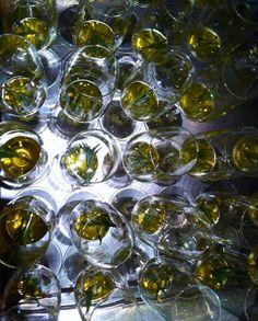Champagner zur Begrüßung bei der #TGLE Berlin von Olivenöle aus Spanien