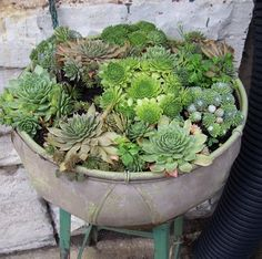 Planting succulents in large groups within a single container is a great way to unite some of your favourite varieties.