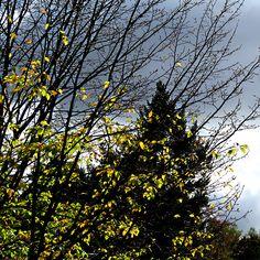 Der Herbst ist kalt, nass, grau, trist? Stimmt so ja nun auch nicht... Ein Fotobeweis im Blog.
