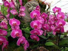 красивые фото цветов: 21 тыс изображений найдено в Яндекс.Картинках
