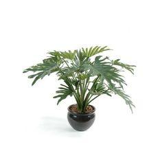 Une jolie grande plante pour l'appartement ! 🌿