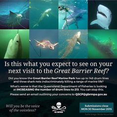 Who would want to see the Great Barrier Reef like this? Sad fact is it is happening RIGHT NOW and Queensland Fisheries want to put more drum lines into a World Heritage Area. Please consider making a submission it doesn't have to be massive just showing your opposition to this barbaric program. The Great Barrier Reef is a jewel on our planet and deserves our protection. @greatbarrierreefqld @queensland @ocean_youth @oceanicpreservationsociety @mission_blue @rickygervais @leonardodicaprio…