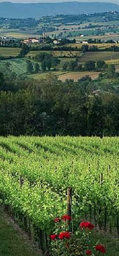 The fertile plain below Montefalco in Umbria, Italy • photo: Lee Marshall on The Telegraph