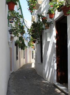 Baroque fountains, rococo doorways and Andalusian geraniums. in Priego de Cordoba - information Cordoba Andalucia, Cordoba Spain, Andalusia, Spanish Festivals, Lets Run Away, Spain And Portugal, Malaga, Geraniums, Holiday Destinations