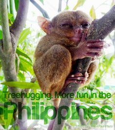 Tarsier in Bohol Philippines Tourism, Philippines Culture, Tourism Department, Bohol, Tourist Spots, Pinoy, Hugs, More Fun, The Help