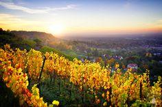 Herbstliches Radebeul bei Sonnenaufgang