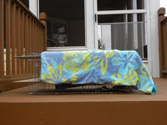 8 Steps to Trap, Neuter, and Return Feral Cats | Catster