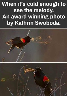 When it's cold enough to see the melody. An award winning photo by Kathrin Swoboda. Funny Weather, Weather Memes, Cute Funny Animals, Funny Cute, Funny Pics, Beautiful Birds, Animals Beautiful, Animals And Pets, Baby Animals