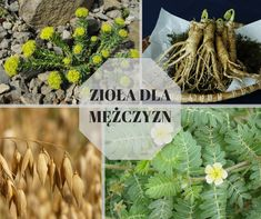 Food And Drink, Hair Beauty, Herbs, Eat, Plants, Survival, Herb, Plant
