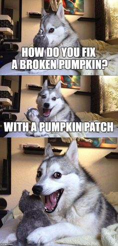 Bad Pun Dog | HOW DO YOU FIX A BROKEN PUMPKIN? WITH A PUMPKIN PATCH | image tagged in memes,bad pun dog | made w/ Imgflip meme maker