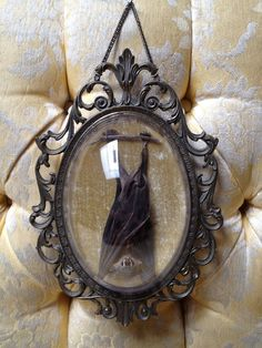 Sleeping Taxidermy Bat in Vintage Ornate Metal Frame. 🔴Lots of things are batty around here.bats in belfries🔔🔴 Taxidermy Bat, Taxidermy Decor, Cabin In The Woods, Cabinet Of Curiosities, Deco Originale, Gothic House, Gothic Room, Gothic Home Decor, Home And Deco
