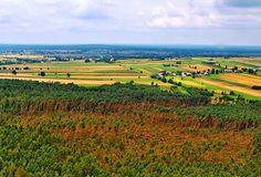 Niemal 20 ha lasu zostało całkowicie zniszczonych podczas nawałnicy, która 4 sierpnia nawiedziła Nadleśnictwo Ruda Maleniecka (RDLP w Radomiu). Leśnicy nadal szacują straty.