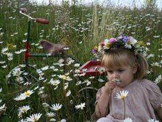 Baby toddler smelling Sweet Daisies
