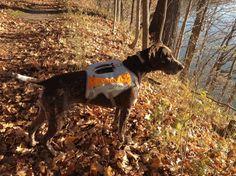 Meet Lance on WalkDoggin.com