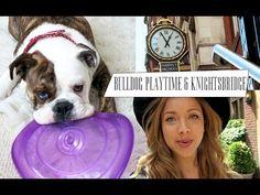 Bulldog Playtime & Knightsbridge   Vlune #3