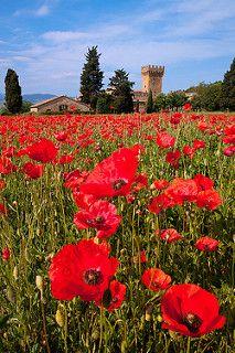 Poppy Field: near Pienza, Italy   by Mike Blanchette
