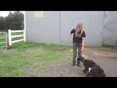Blackjack the Trick Goat (how to train your goat to do tricks) - YouTube