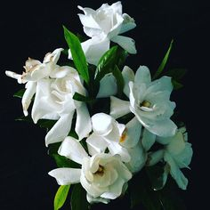 White puffy spring flowers visions pinterest spring flowers white puffy spring flowers visions pinterest spring flowers and flowers mightylinksfo