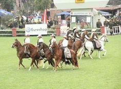 Peruvian horses