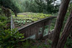 Az a szép zöld…tető! Tájba simuló lakóház az ősfás hegyoldalon   Életszépítők