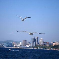 Владивосток – в числе самых красивых морских городов мира   Знаменитый журнал National Geographic включил Владивосток в рейтинг самых красивых морских городов мира.  Отмечу, что при составлении рейтинга его авторы решили не включать сюда уже поднадоевшие города, а обратились к новым именам.  В рейтинг попали Брисбен, Дурбан, Марсель, Перт, Портленд, Сан-Диего, Сент-Джонс, Таллин, Тель-Авив и, самое главное, Владивосток.  Наш город стал единственным российским городом в этом рейтинге.