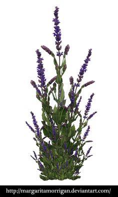 purple bush by margarita-morrigan on DeviantArt