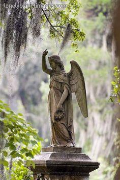 Angel sculpture at Bonaventure Cemetery in Savannah, GA.Garden of Good and Evil...Midnight!