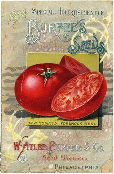 Sisters Warehouse: Vintage seeds packs... card seeds