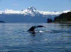 Tips for People Going on Their First Alaskan Cruise by www.cruisetravel-tips.com