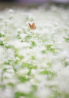 The butterfly counts not months but moments,and has time enough ~ Rabindranath Tagore. Via Popham Meadow, love her nature pictures Field Of Dreams, All Nature, White Gardens, Beautiful Butterflies, Haiku, Champs, Spring Time, Mother Nature, Wild Flowers