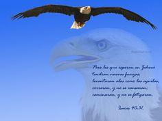 """Águila en pleno vuelo. Fondo de pantalla con el texto """"Pero los que es peran en Jehová, tendran nuevas fuerzas, levantaran alas como las aguilas, correran y no se cansaran, caminaran y no se fatigaran"""""""