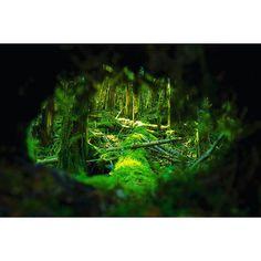 【yukiii1029】さんのInstagramをピンしています。 《覗き穴からシシ神様の出待ち(^^) . . . #天狗岳 #登山 #山登り #trekking #八ヶ岳 #森 #forest #苔#moss #緑 #green #landscape #beautiful #photo #picture #camera #カメラ #写真 #一眼 #一眼レフ #ニコン #d750 #nikond750 #東京カメラ部 #tokyocameraclub #igersjp #jalan_asobi》