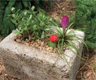 How to Make a Hypertufa Planter Project