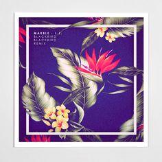 Blackbird Blackbird - Various Artwork - Johnson & Drake
