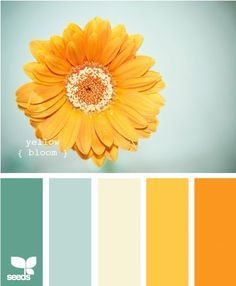 Seeds Design | Color Board Inspiration | Sunflower Tones | Yellow Orange and Teal Blue Color Scheme Palette